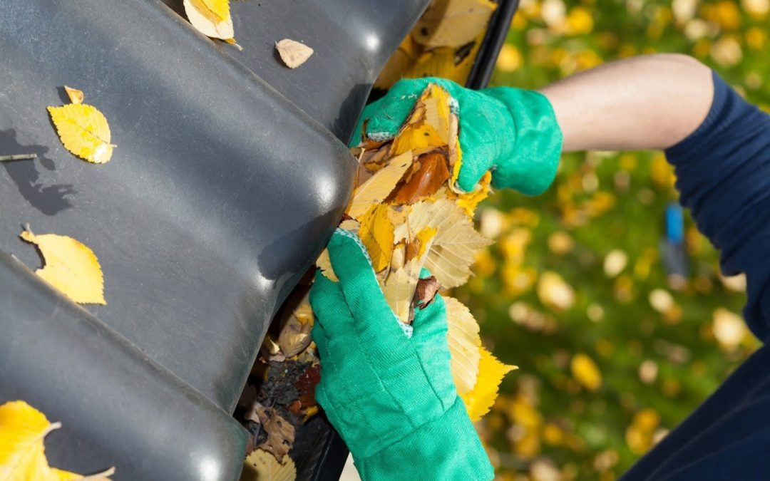 bee removal service des moines