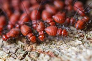 exterminator serving Des Moines area, exterminator serving Urbandale IA area, termite control, termite exterminator IA